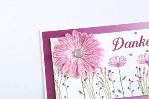 Gänseblümchen in Sommerbeere